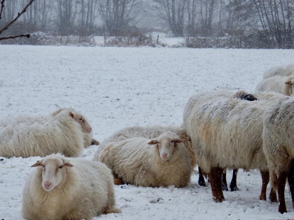 De meiden van de Treeker wissel staan op de Tabaksteeg. Ze zoekt beschutting bij elkaar tegen de wind en sneeuw. Dat levert mooie winterse plaatjes op. Jolanda de Graaff © BDU media