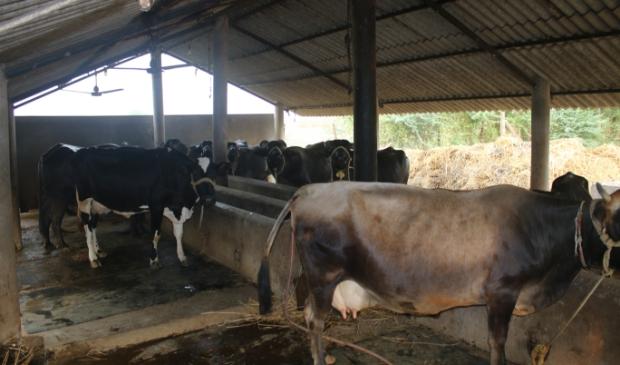 de stal van Tulp Garden India