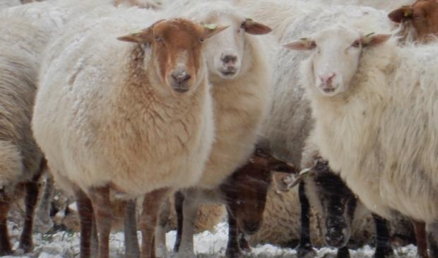 <p>De meiden van de Treeker wissel staan op de Tabaksteeg. Ze zoekt beschutting bij elkaar tegen de wind en sneeuw. Dat levert mooie winterse plaatjes op.</p>
