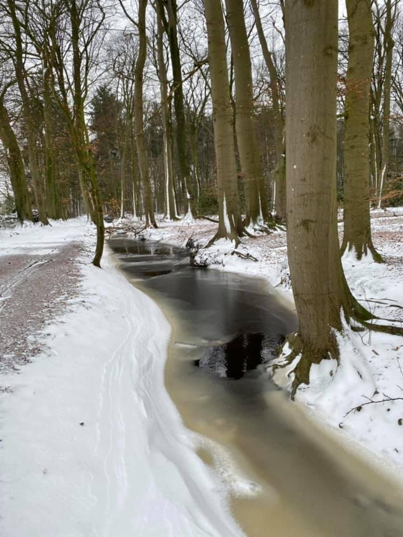 In het Stoutenburgse bos Desie Schutter © BDU media