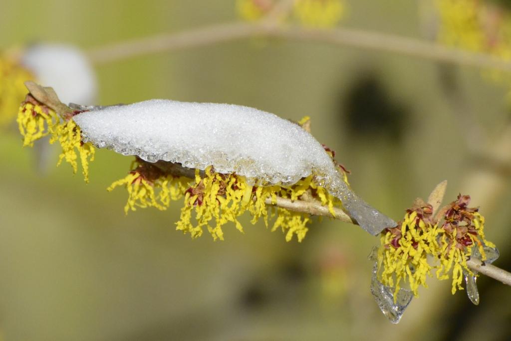 dooiende sneeuw Henk van der Rijt © BDU media