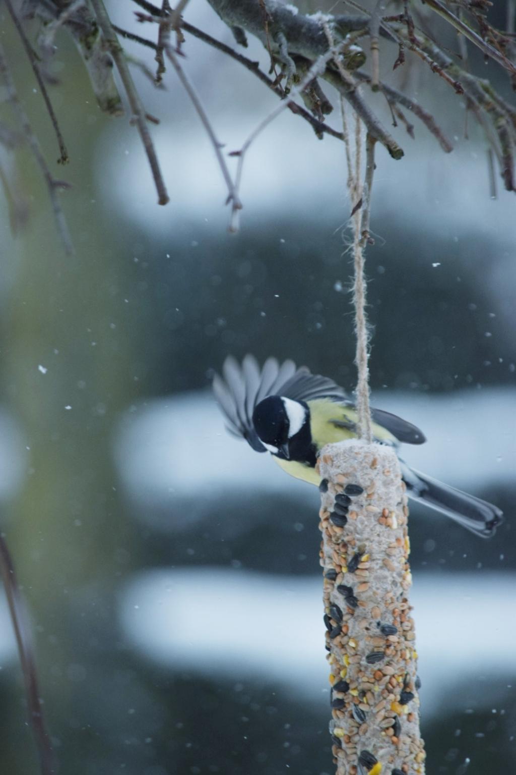 <p>Winter in de tuin</p> <p>Sebastien Merluzzi</p> © BDU media