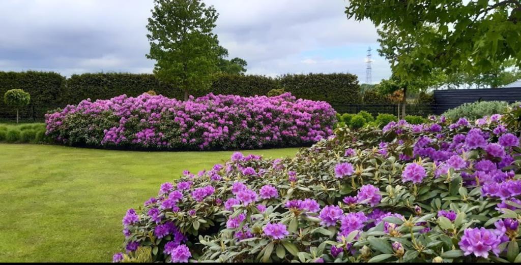<p>Bloeiende rhododendrons.</p> <p>Nova Zembla</p> © BDU media