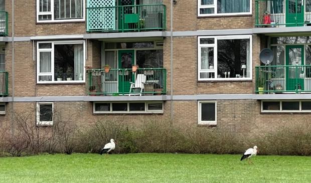 Ooievaars voor flatgebouw