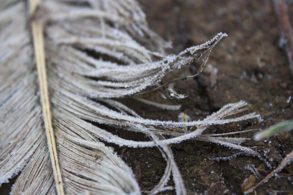 Zwanenveer - net even anders dan het Zwanenmeer J. Jansen © BDU media