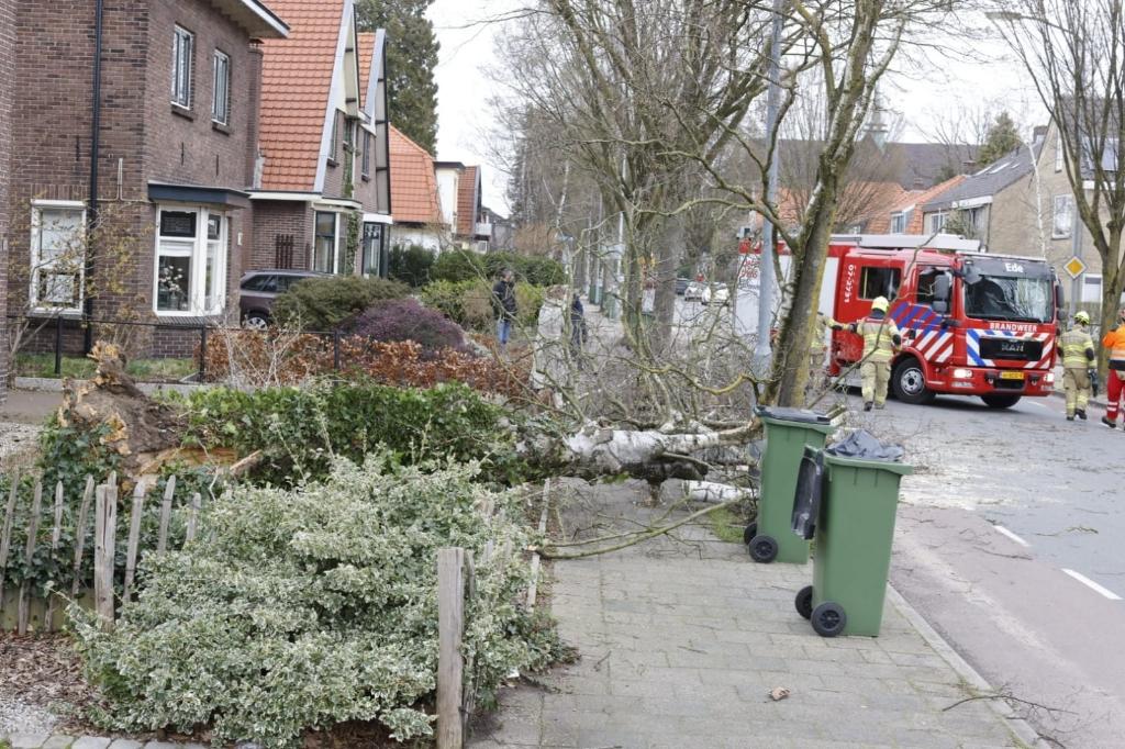 Op de Verlengde Maanderweg waaide een boom om. Ted Walker © BDU Media