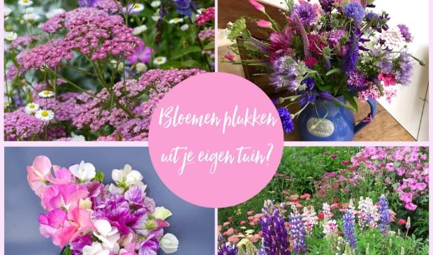 Bloemen voor je pluktuin