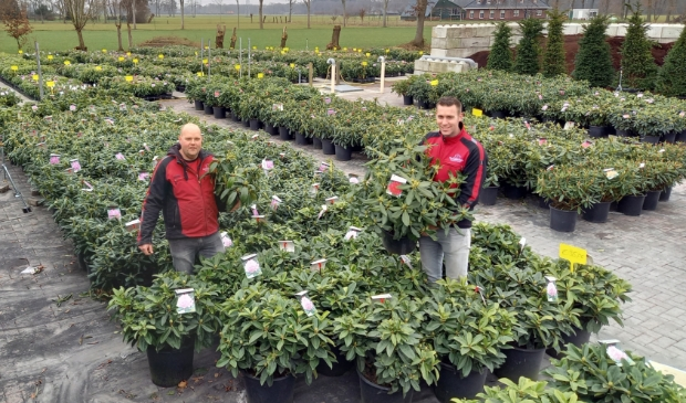 <p>Erwin Adams (links) en Robert Broer van rhododendronkwekerij Nova Zembla, waar je coronaproof planten kunt kopen.</p>