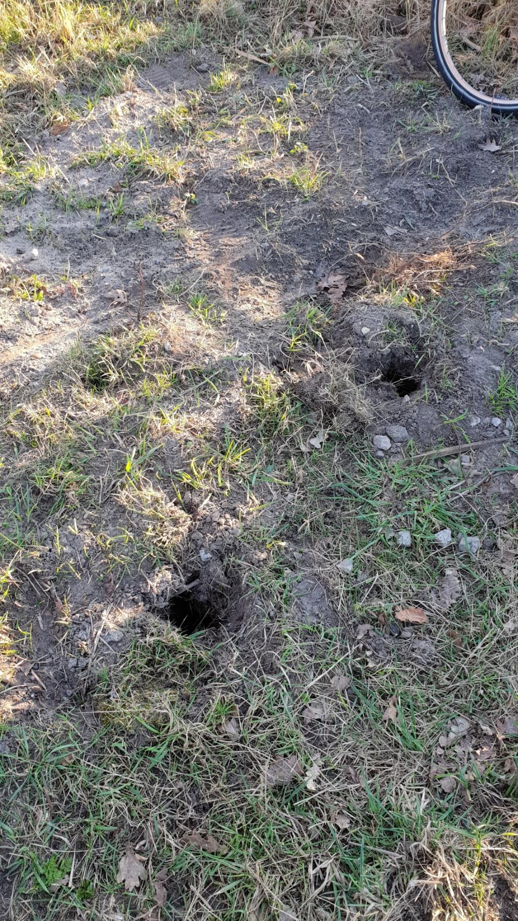 Gaten in de grond waar de palen in stonden Dick Reef © BDU media