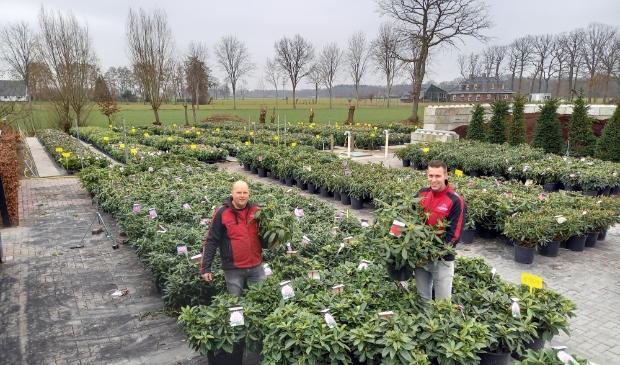 <p>Erwin Adams (links) en Robert Broer van rhododendronkwekerij Nova Zembla.</p>