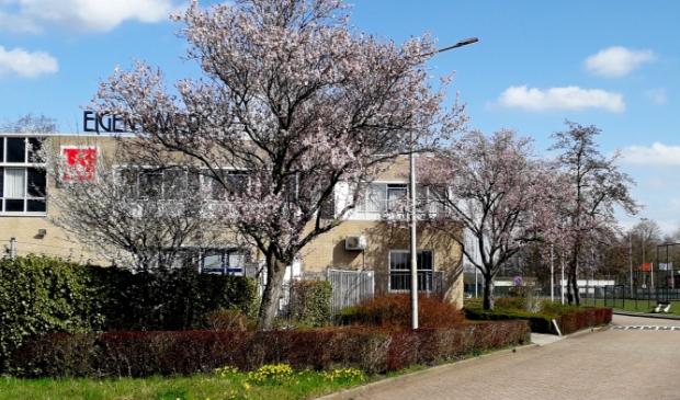 <p>Bomen in bloei langs de Wethouder Koolhaasweg.</p>