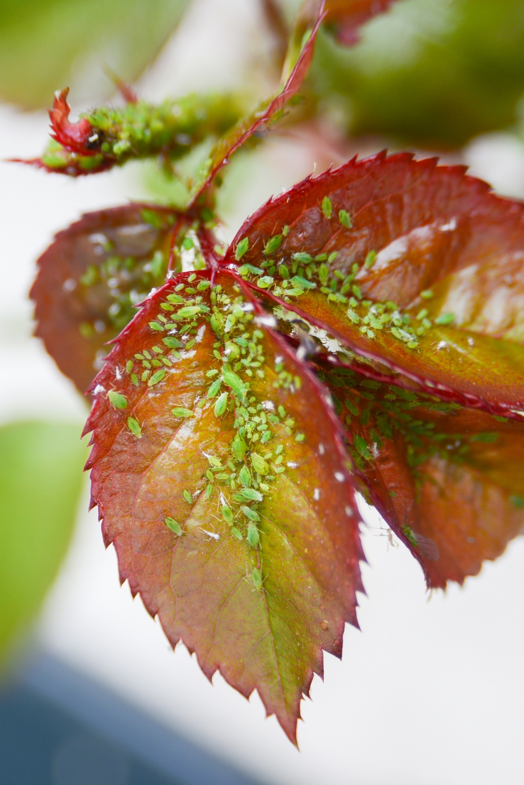 Lastige beestjes in de tuin Suze Peters © BDU