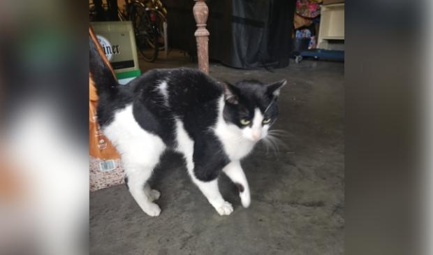 Gevonden kat Eendrachtstraat Terschuur