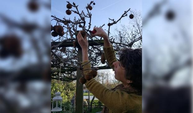 <p>Marlon van den Bos oogst hier haar eigen kiwi&#39;s die ze gebruikt voor haar kombucha.&nbsp;</p>