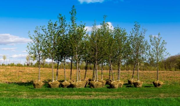 Meer bomen zorgt o.a. voor extra zuurstofproductie, bestrijding klimaatverandering, reiniging vervuilde lucht, verkoeling van straten, voedselproductie, verfraaiing van de omgeving en daardoor waardevermeerdering van het onroerend goed.