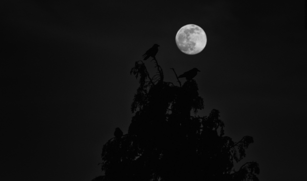 <p>Als je goed kijkt, zie je de schaduwen van de vogels in de boom bij het maanlicht.</p>