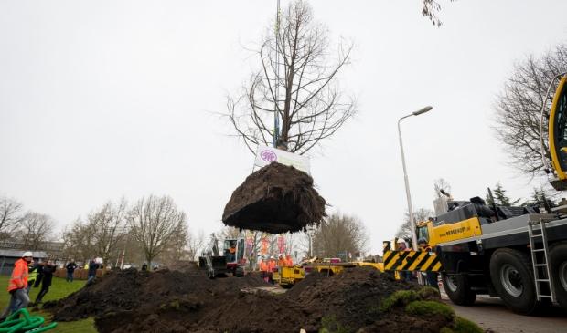 <p>Met uiterste precisie werden drie bomen verplaatst vanuit de Craijensteijn.</p>
