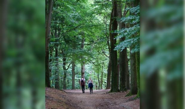 <p>Meer mensen dan ooit besloten de Utrechtse natuur financieel te steunen.</p>
