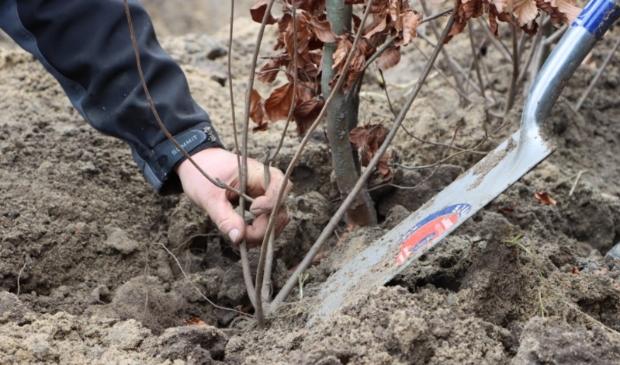 Met beleid worden de bomen geplaatst