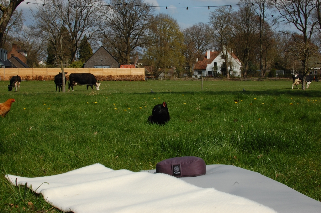 Schapenwollen matten op het gras  Marte Kamsteeg © BDU media