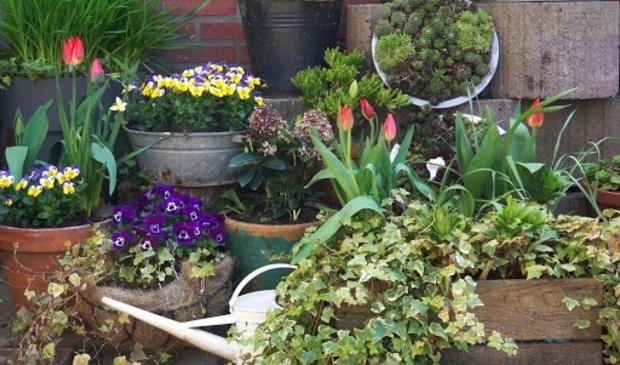 <p>De kans op een tekenbeet in eigen tuin is niet gering.&nbsp;</p>