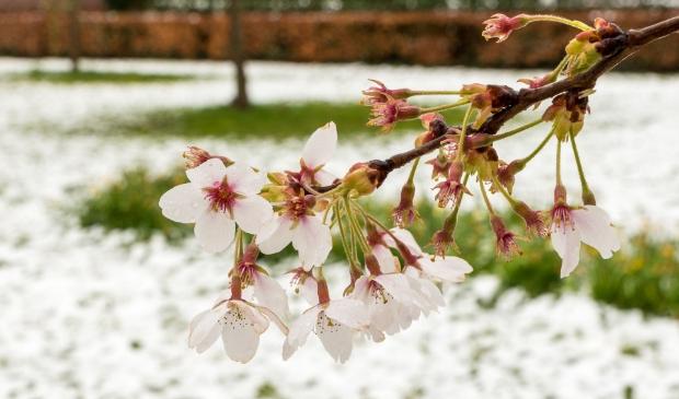 <p>Winterse lente</p>