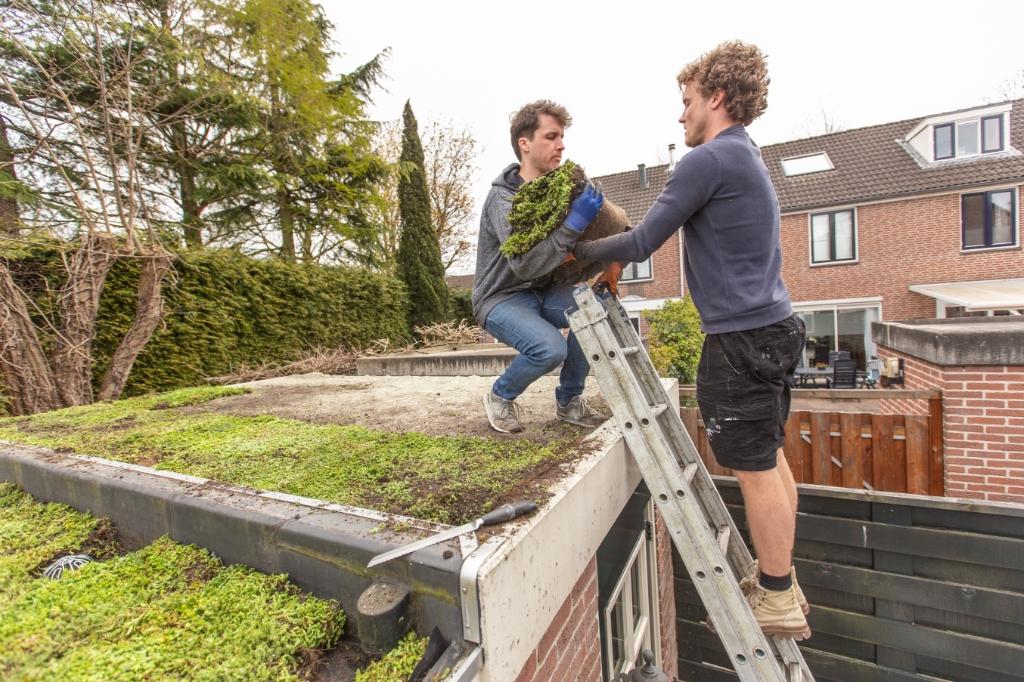 Stap 4: Sedummixmat Erik Luyten © BDU media