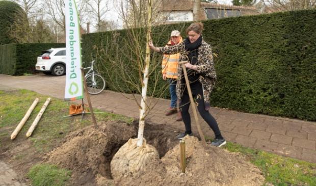 <p>Wethouder Annelies Vissers plant de eerste boom aan de Bilderdijklaan</p>