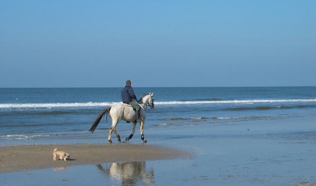 <p>Per strand gelden er verschillende data waarbinnen het verboden is om paard te rijden of de hond los te laten lopen.</p>