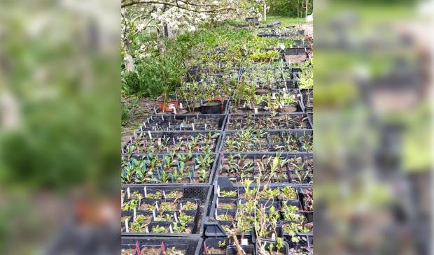 Plantjes voor de plantjesmarkt