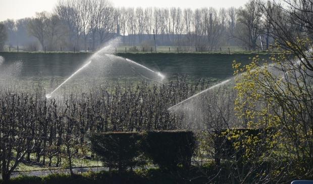 Beregenen van de fruitbomen langs de Rijndijk in Wijk bij Duurstede