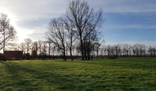 Weiland met bomen en ochtendzon