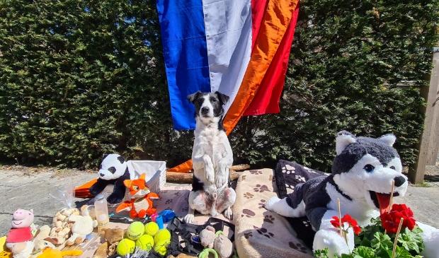 Hond Mick op de vrijmarkt