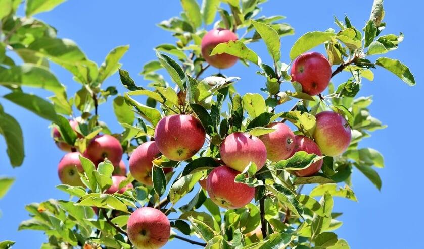 Gemeente Velsen deelt appelbomen uit