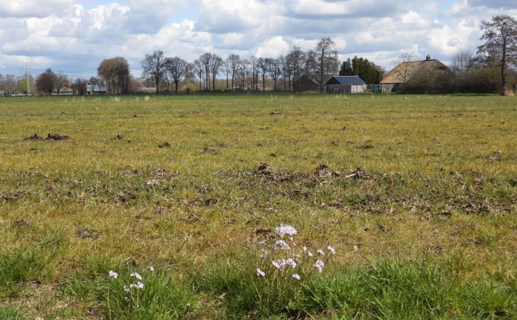 De dans ontsprongen - pinksterbloemen langs doodgespoten grasland. Kees van Reenen © BDU media