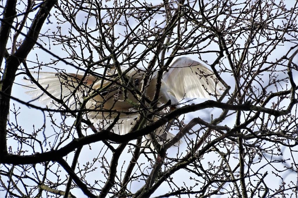 Lepelaars Hans Blomvliet © BDU media