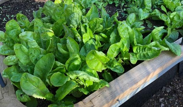 Groente en fruit kweken kan ook in potten en bakken