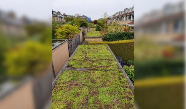 <p>Groene daken</p>