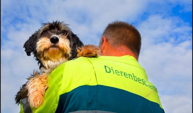 Redding van een hond