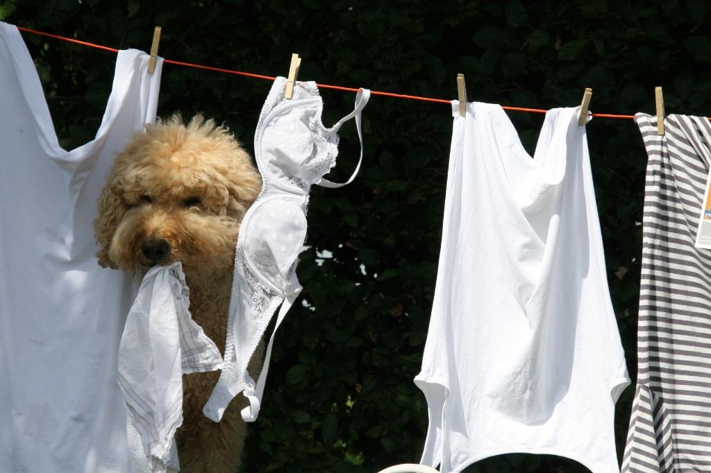 Butler hangt de was op De Hond Kan De Was Doen © BDU media