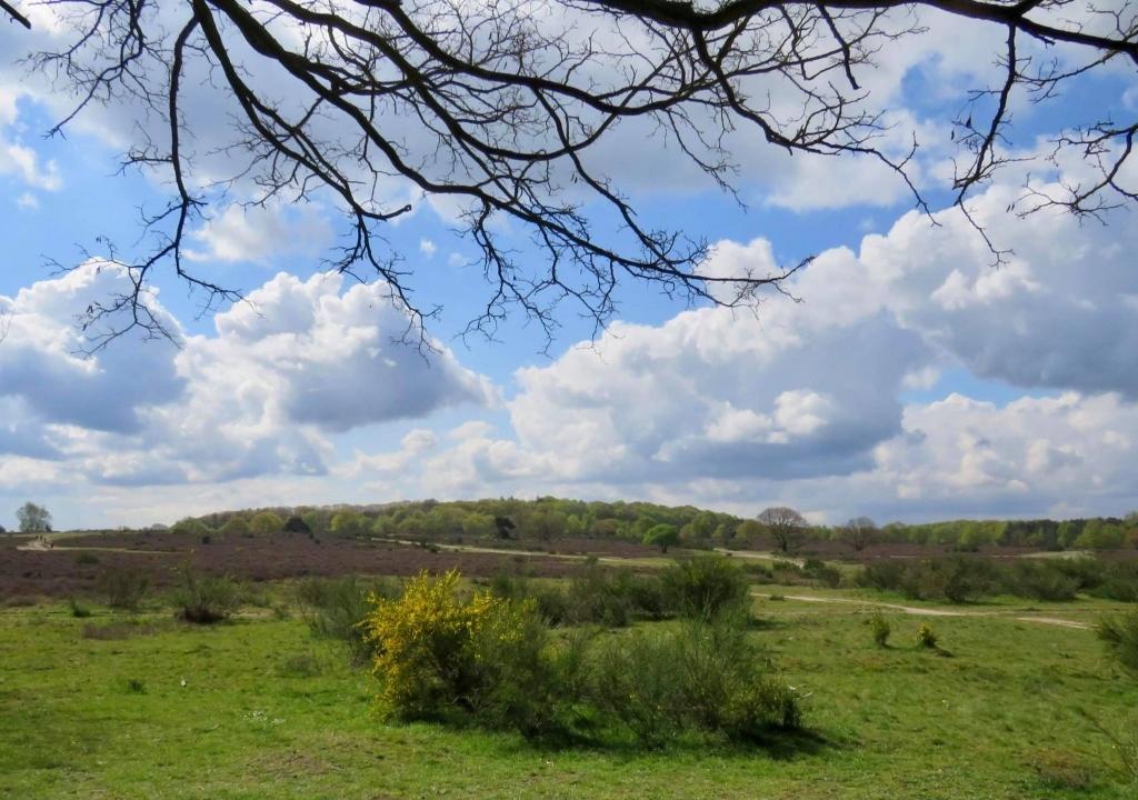 de Hoorneboegse Heide met zicht op de Zwarte Berg Onno Wijchers © BDU media
