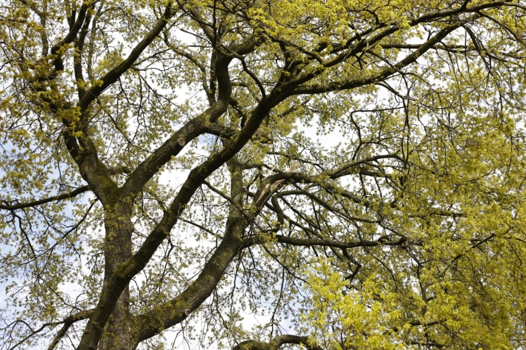 <p>Op de Steneveld in Ede hangt dinsdagmiddag een tak los boven de weg. </p> Ted Walker © BDU Media