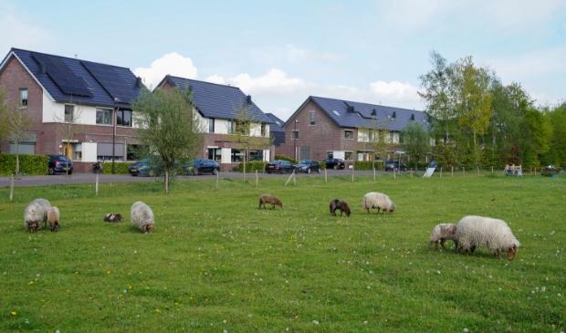 De locatie aan de Huybertsenweg, waar nu nog een kudde Drentse heideschapen graast © Tim van Donkersgoed © BDU media