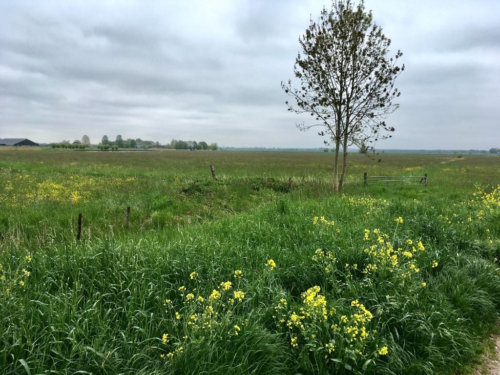 Koolzaad en bloeiend gras Willy van Dijk-Doornenbal © BDU media