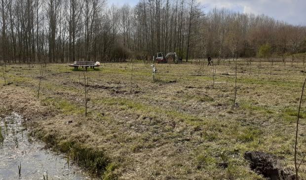 <p>Het geboortebos in Nieuw Wulven is deels herplant</p>