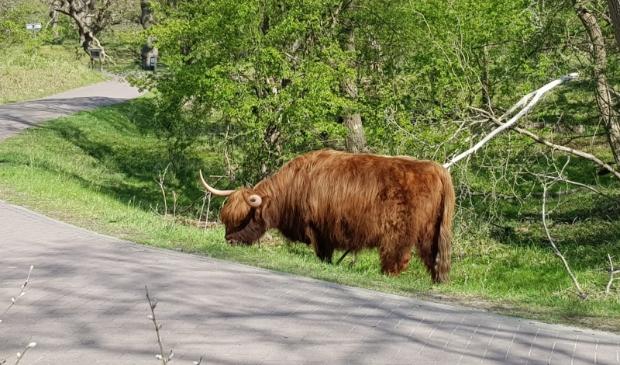 <p>In de Beleefweek zijn er diverse wandelingen, excursies en andere leuke activiteiten in Nationaal Park Zuid-Kennemerland.</p>