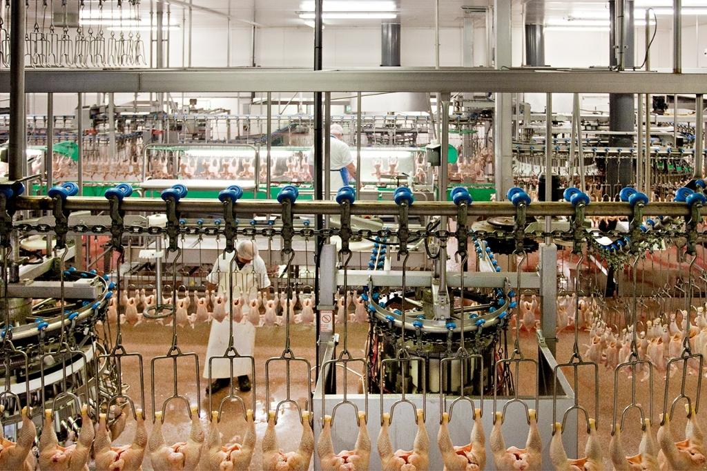 De vleeskuikenslachterij van Pluimveeverwerking Jan van Ee. Van Ee © BDU media