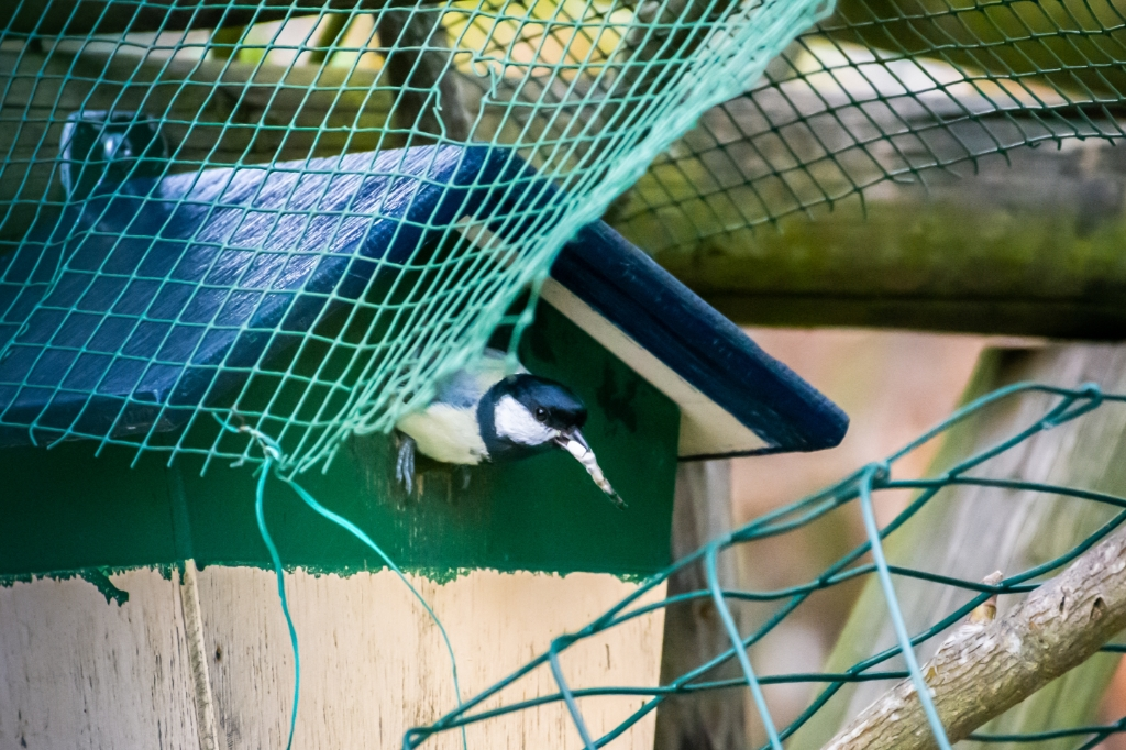 Tuinvogel Ruta Saksens © BDU media