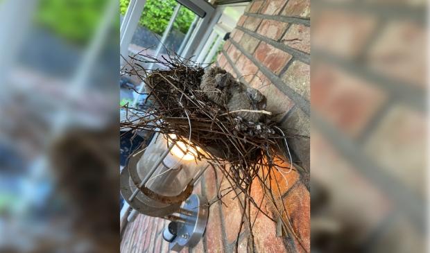 Nestje met 2 jonge duifjes