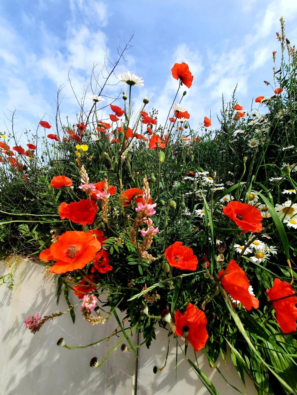 Flowerpower in Houten.Een rondje vijfwal is een feest!<br><br> Petra Verhooren  © BDU media